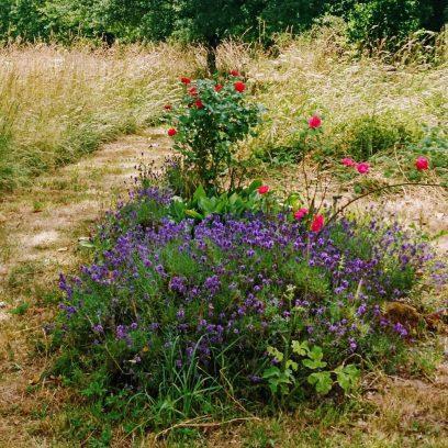 Roses & Lavender